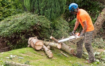 additional services offered by Perth And Kinross tree surgeons