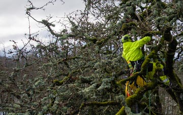 experienced Perth And Kinross arborists are needed