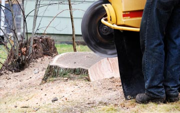 rated Perth And Kinross tree stump removal companies