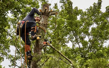 tree surgeon Perth And Kinross