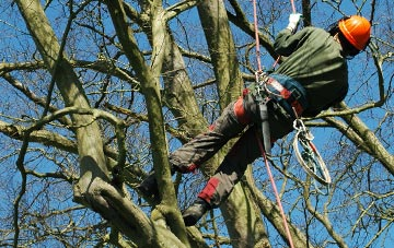 tree surgery Perth And Kinross