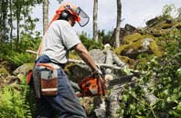 Perth And Kinross tree removal services