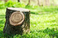 Perth And Kinross tree stump removal services