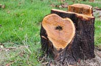 free Perth And Kinross tree stump removal quotes