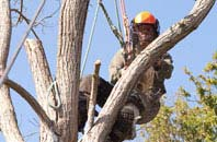 Perth And Kinross tree surgeon services