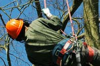 free Perth And Kinross tree surgeon quotes